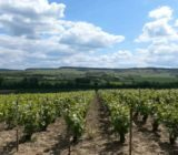 France Champagne vineyards between Chateau Thierry and Epernay x