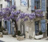 France Provence Camargue  purple rain tree x