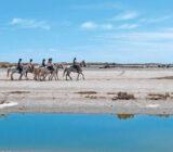 France Provence Camargue horses beach x