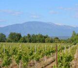 France Provence Camargue vineyard Mnt Ventoux x