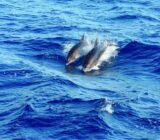 Ionian Islands dolphins
