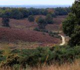 National park Hoge Veluwe