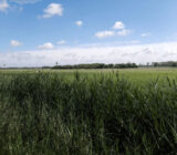 Bruges countryside.jpg x