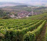 France Burgundy vineyard